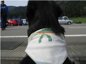 2010N418cyao.jpg