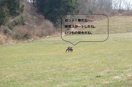 2017.04.10.しか.jpg