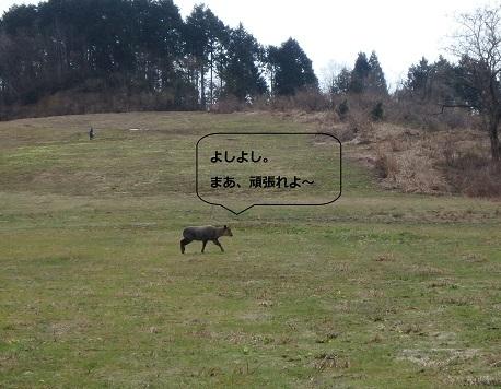 2017.04.10.しか2.jpg